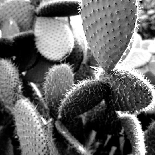 Cactus vertical